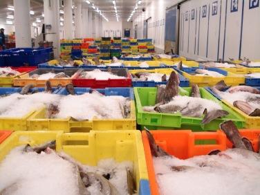 Port de Pêche Lorient-Keroman (41)