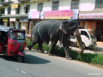 elephant-dans-la-rue-1