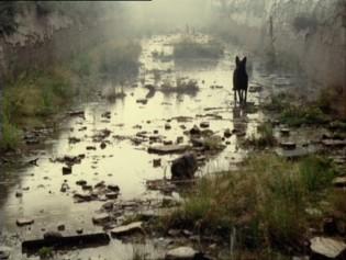 a-andrei-tarkovsky-stalker-dvd-review-dvd-comparison-mk2-1