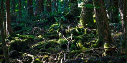 aokihagara-roots-web-1280x640