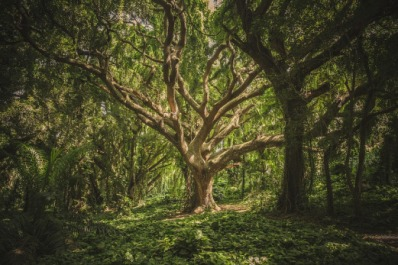 tree-1209774_960_720