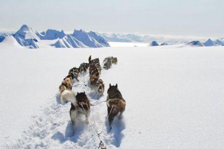 Traîneau à chiens - Spitzberg - Norvège