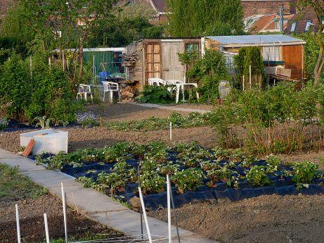 Jardins_familiaux_Tourcoing_J3