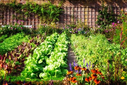12.Comment-organiser-mon-espace-entre-le-jardin-et-le-potager