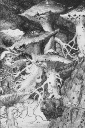 fungus-bolets-quim-hereu_12_543x814