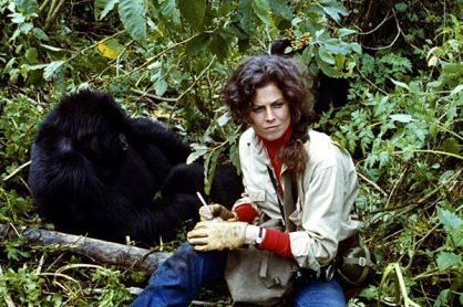 gorilles-dans-la-brume_WEB